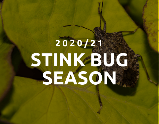 2021 Stink Bug Season