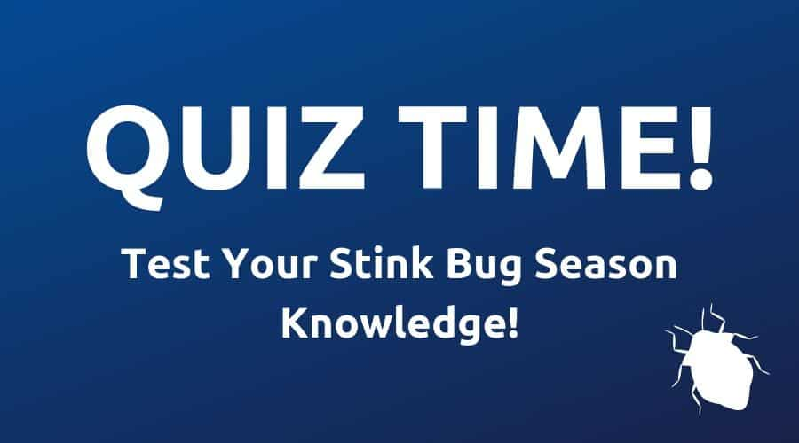 stink bug season quiz