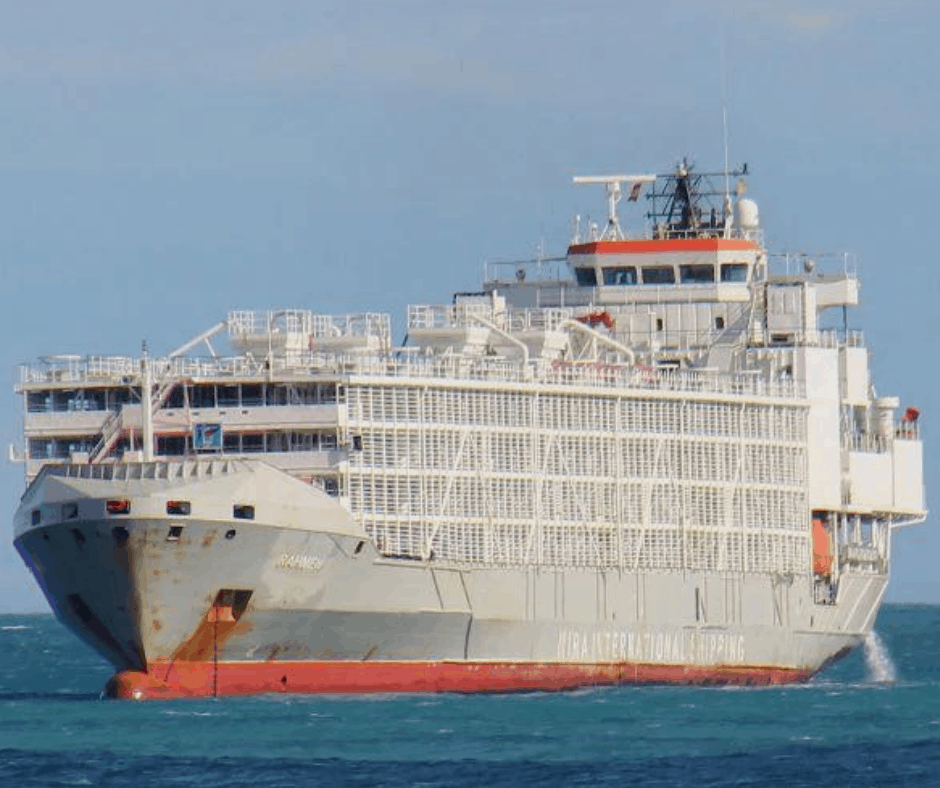 Gulf livestock 1 ship lost to bad weather